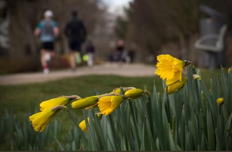 Family daffodil planting